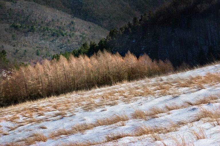 Monte Ceppo, Alpi Marittime, Liguria, 12.31 p.m.