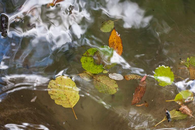 Foglie d'autunno № 5, 14.03 p.m.
